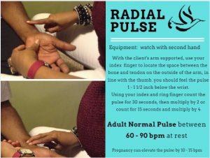 radial-pulse
